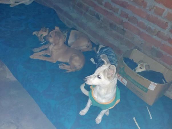 Help Society Of Stray Animals