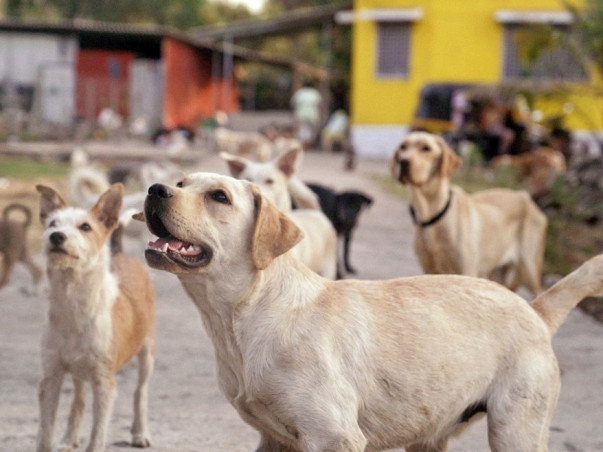 Help 300+ Abandoned And Rescued Animals During The Pandemic!