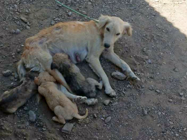 Help Us Treat Stray Dogs In and Around Shirdi