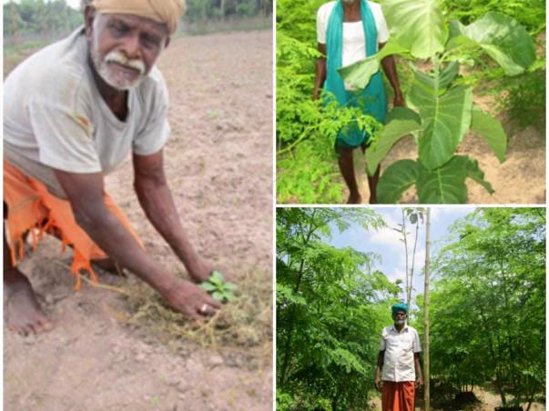 Plant Trees Online!