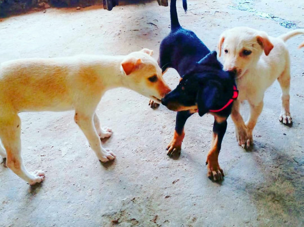 Raise funds for the stray animals their treatment,food & sterilization