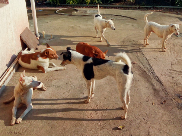 Help Rescued Dogs Find A Home