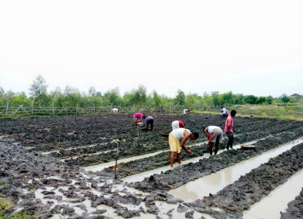Support Sristi Foundation Run a Sustainable Organic Farm