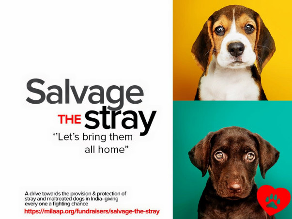 Salvage The Stray
