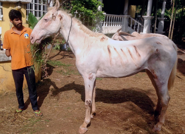 HELP BUILD A CHRISTMAS STABLE FOR ATHENA, AN ABUSED HORSE.