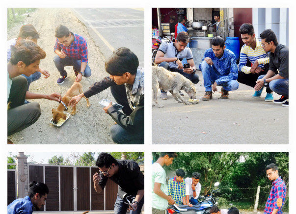 Help Us Feed And Take Care Of Street Dogs