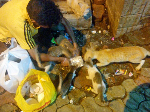 Help More Than A 100 Strays Fight Parasites And Become Healthy