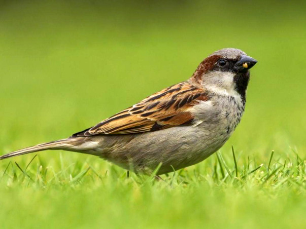 Fundraising to Provide Feeders and Houses for Sparrows in Chennai