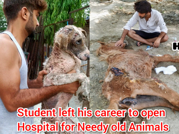 Help Needy abandoned, Paralyzed Animals