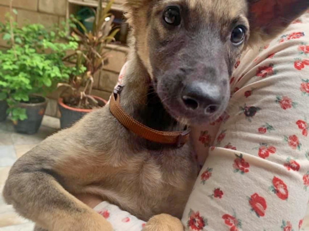 Help Mitsy Reach Her Forever Home!