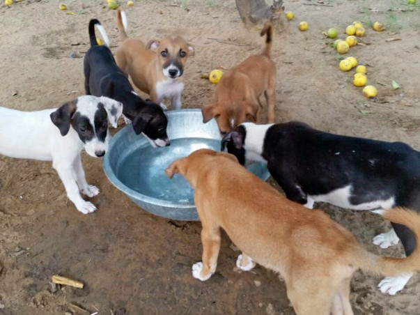 We need your help to take care of 300+ street dogs in 2020