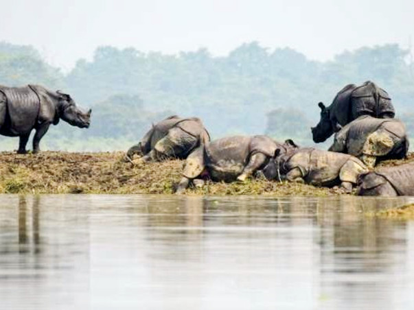 Help Assam flood affected people