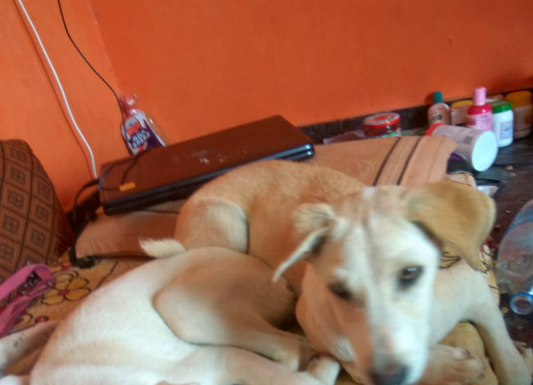 Help me feed Rescued Stray Puppies