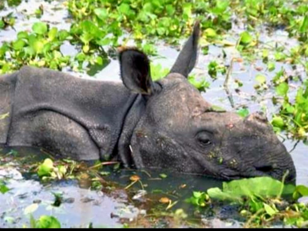 Help Rajkhowa & Arya to aid Assam Flood Victims and Endangered Animals