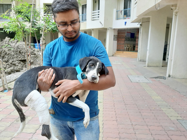 Urgent help required for a Kali and some puppies.