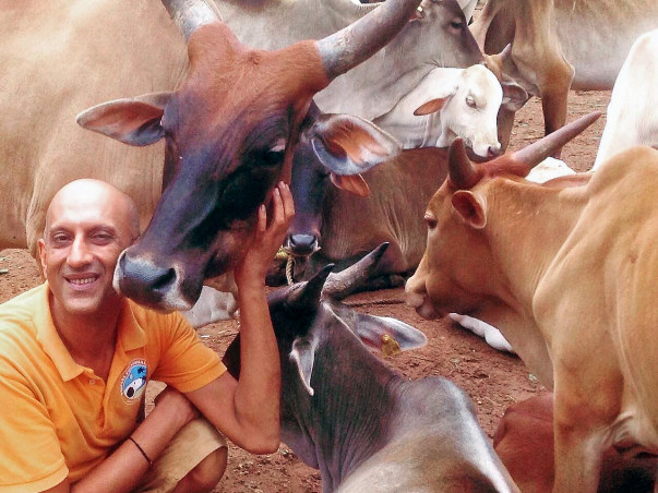 Help Atul Rescue and Treat Injured Cows