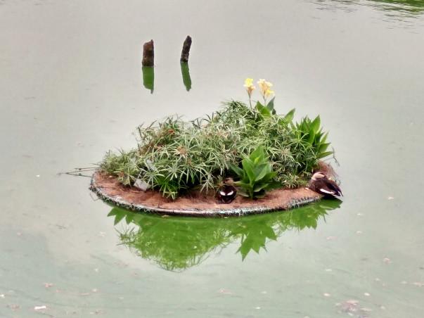 Adopt an Island - Bring Life to Hauz Khas Lake