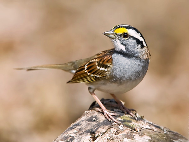 Fundraising to provide feeders and houses for sparrows in parks of Chennai. Join the project!