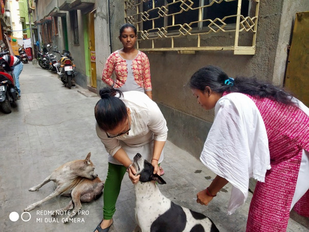 Join Me To Support Stray Dogs