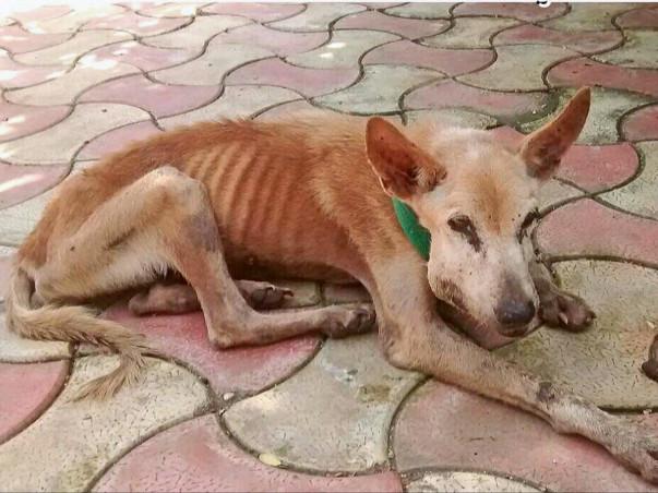 Help Us To Rescue Street Animals