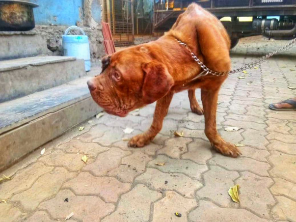 Humans failed them! These 3 Abandoned Dogs Need Your Help!