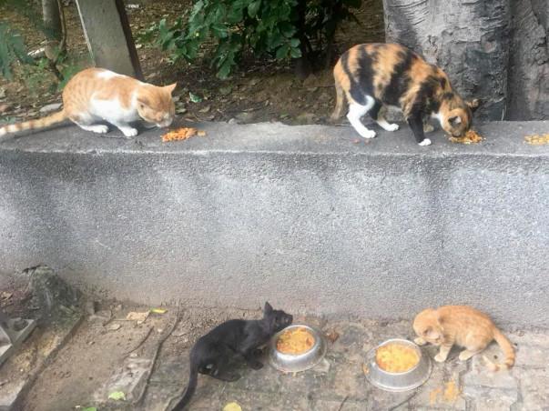 Help Sterilise Stray Cats in Hauz Khas, Delhi
