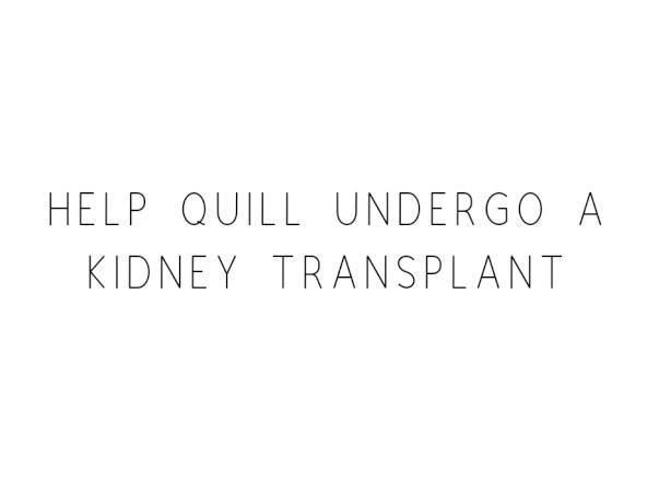 Help Quill Undergo A Kidney Transplant
