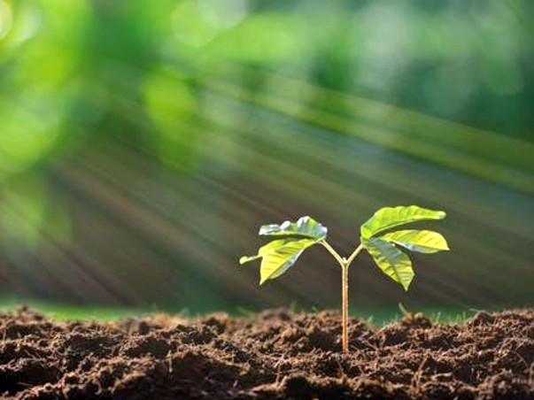 Join Me To Plant Trees