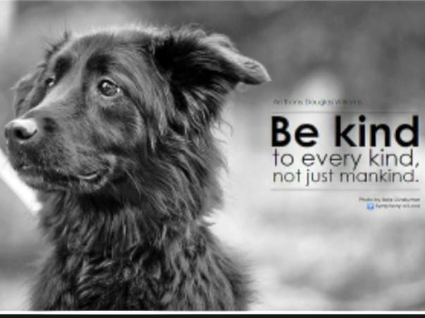 Help Street Dogs & Cats