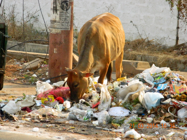 Save Cows by Preventing Plastic Pollution