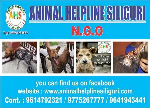 Help Animal Helpline Siliguri to continue to save Stray Animals