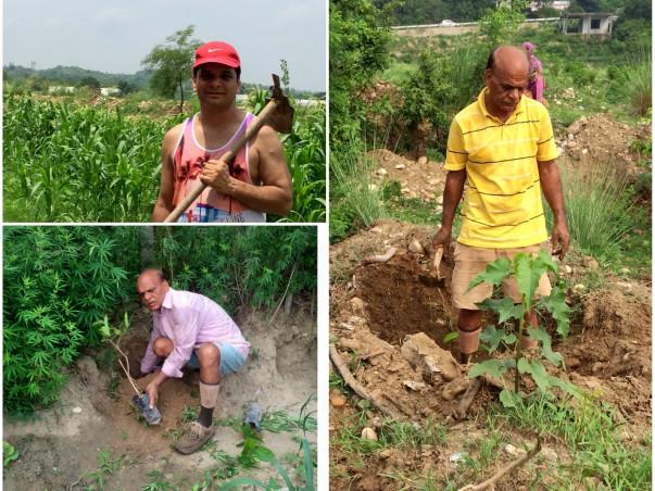 Planting 1000 Trees in Una, Himachal Pradesh