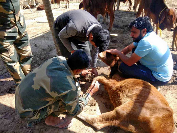 Dhyan Foundation Rehabilitates Cattle Rescued by BSF