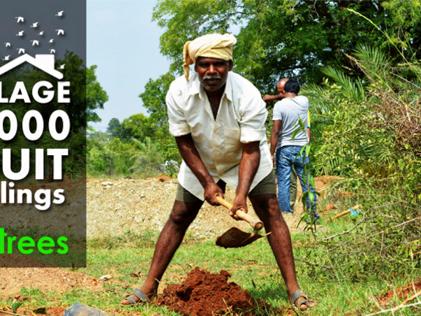 I am fundraising to do plantation program in my City Cuttack