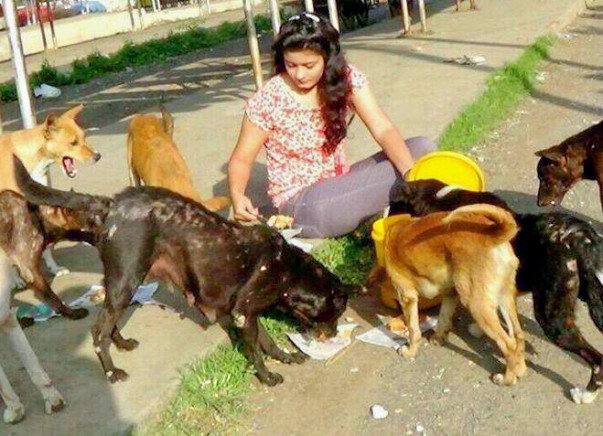 Help Us Treatment, Feeding And Care Of Stray Animals In Bhopal
