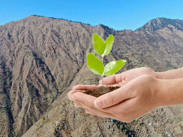 Plant trees with our cooperative in the Himalayas