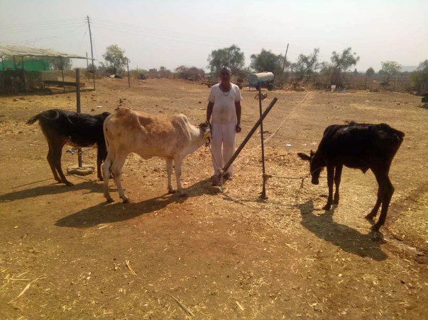 Drought Relief For Milch Animals