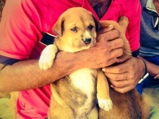 Food medicine and Sterilization for Street Pups