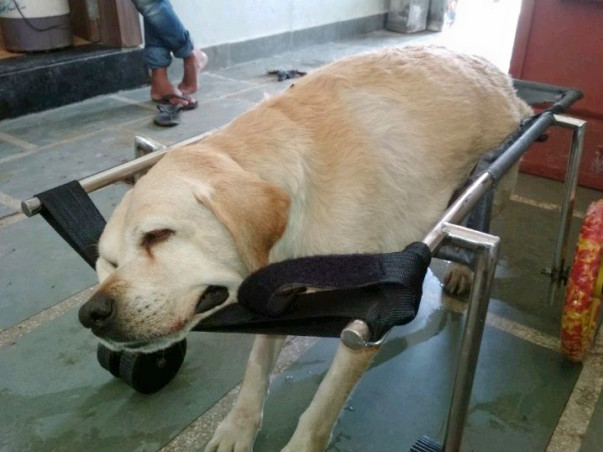 #Supportdisableddogs... Let us make wheelchair for canine's.