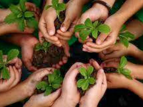 Let's plant a tree on this children's day