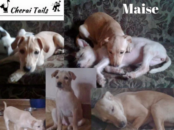 Help Cherai tails get these Puppies a New Home