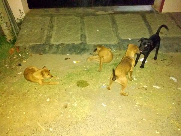 Help Us Keep Street Dogs Alive
