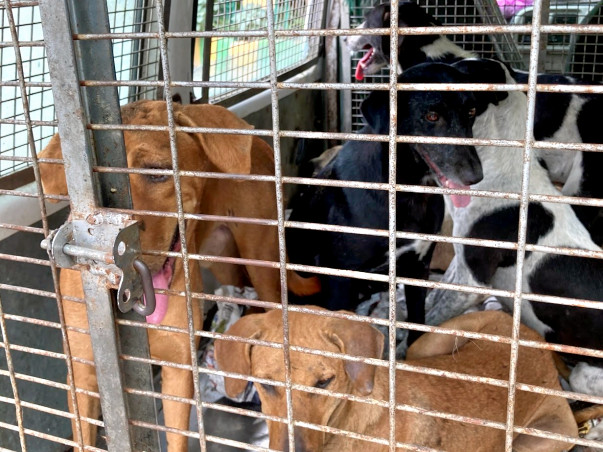 Help Me Spay/Neuter Street Dogs of NCR