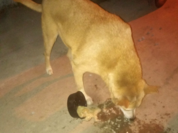 Help To Feed And Provide Medical Facilities For Street Dogs
