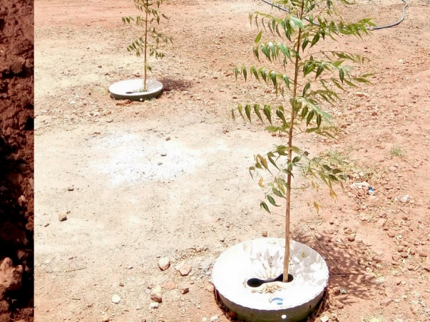 ECO-SYSTEM REPAIRING, GROWING TREES WITH 99% LESS WATER