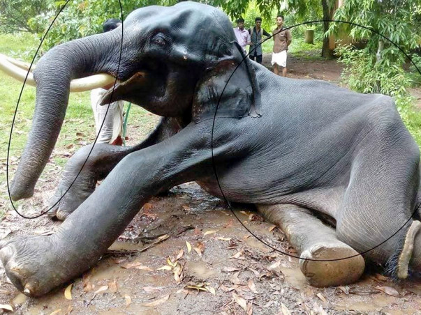 Support Kerala's Animal's legal rights