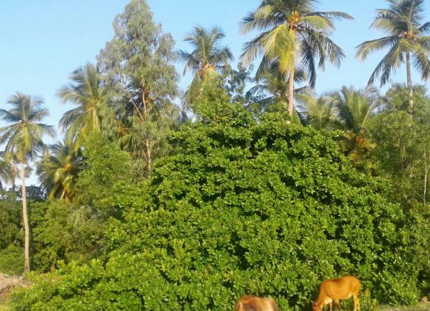 Goat Farming And Moringa Farming