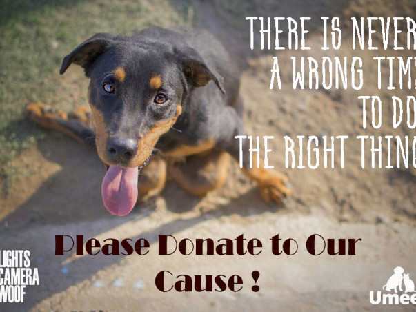 Help us Sterilize & Treat rescued dogs at Umeed's Rehab Center !