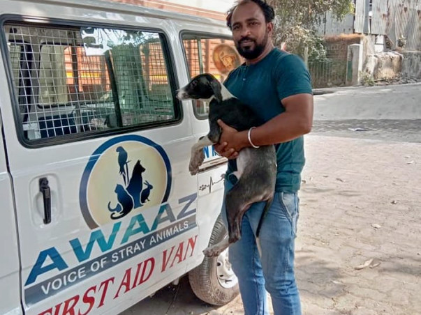 Help Awaaz to Help Stray Animals of Mumbai
