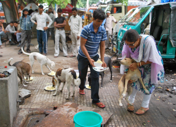 #BeBoldForChange. Help this senior citizen feed 550+ stray dogs daily